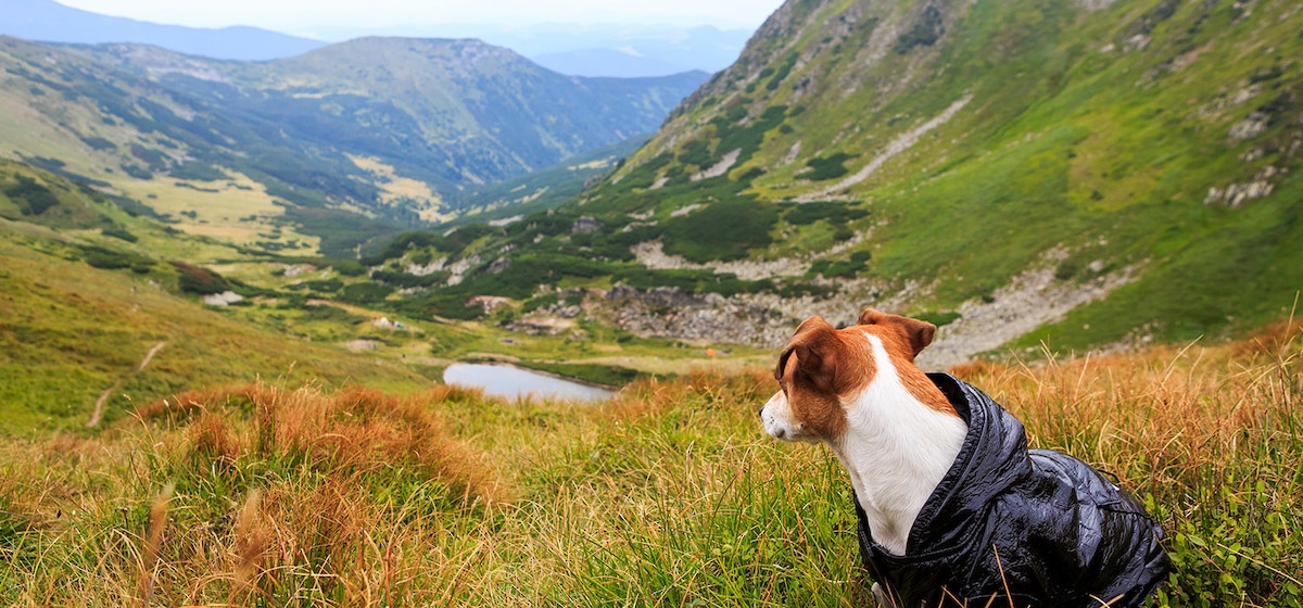 Pet Friendly Travel Tips