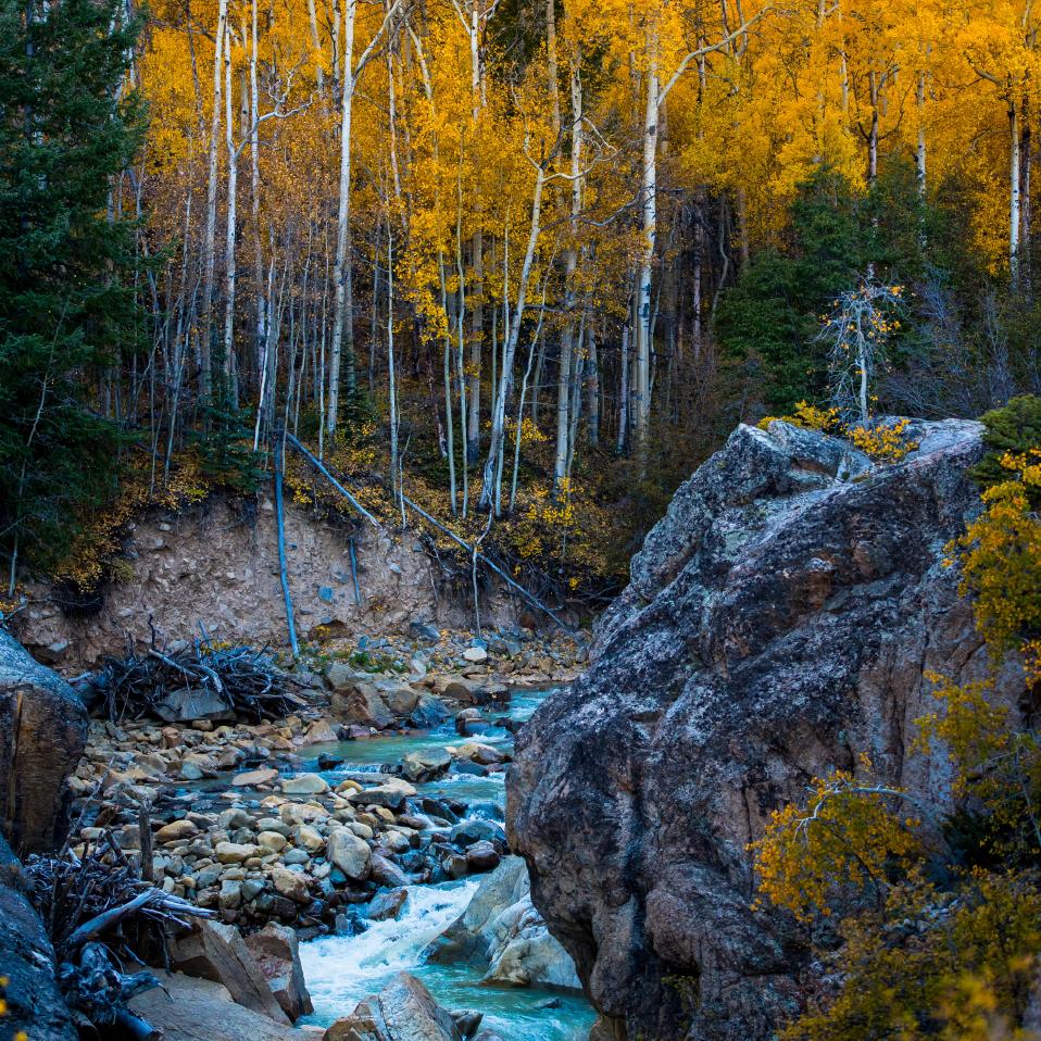 Fall Colors in Aspen Colorado