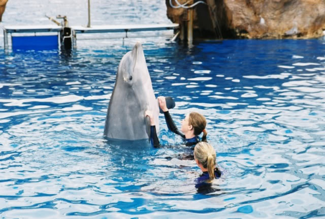 Trainer for a Day Seaworld