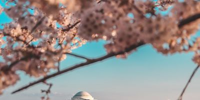 Travel Advice for the National Cherry Blossom Festival in DC